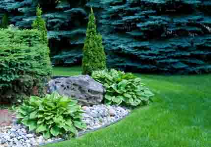 Shrubs and Rocks Landscaping
